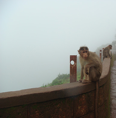 Monkey Point in Mahabaleshwar